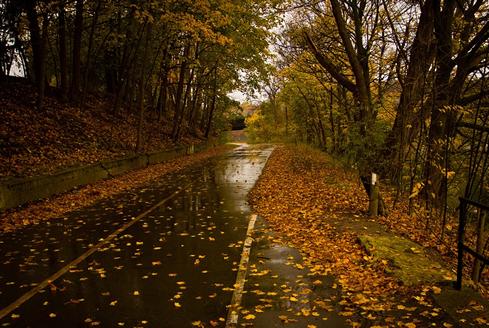 La conducción en otoño